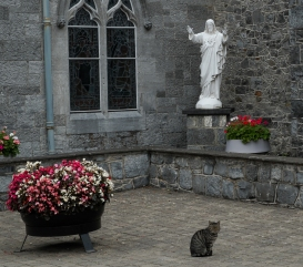 Blessed by the cat. Back Abbey in Kilkenny.