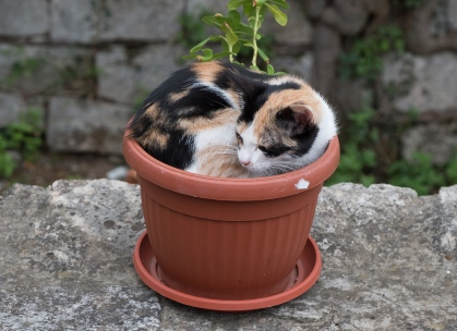 Mostar potted cat.