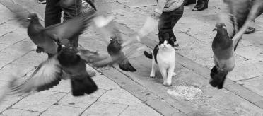 Pigeon hunting.