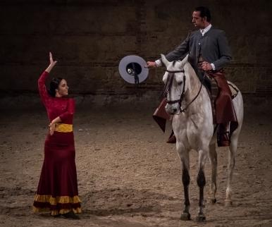 Andalusian Horse Show In Córdoba